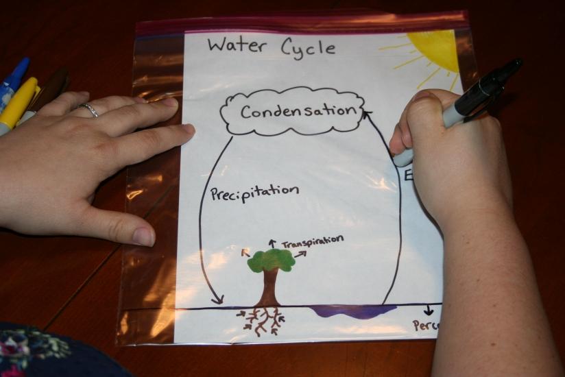 water cycle bag (1)