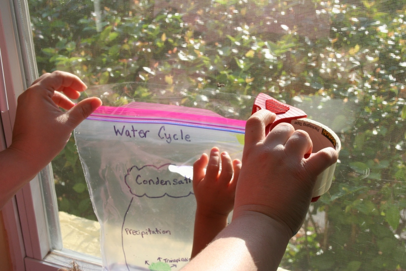 water cycle bag (15)
