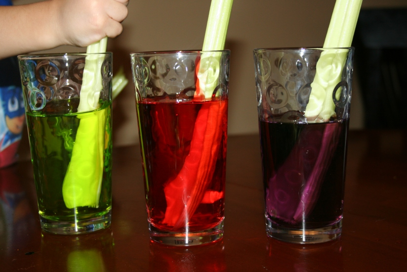 Color Changing Celery (7)