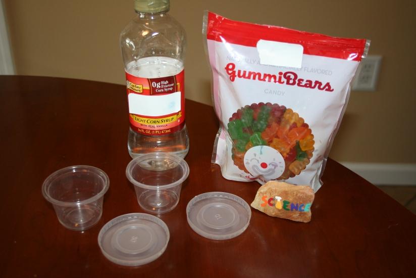 Growing Gummy Bears (4)