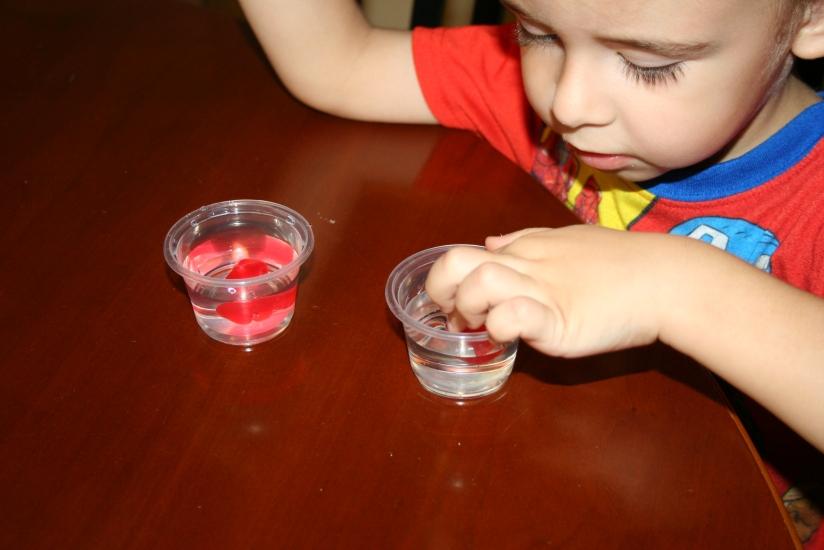 Growing Gummy Bears (8)