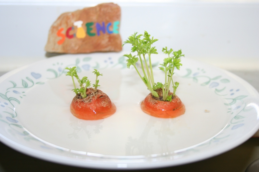 Growing Carrot Greens (34)