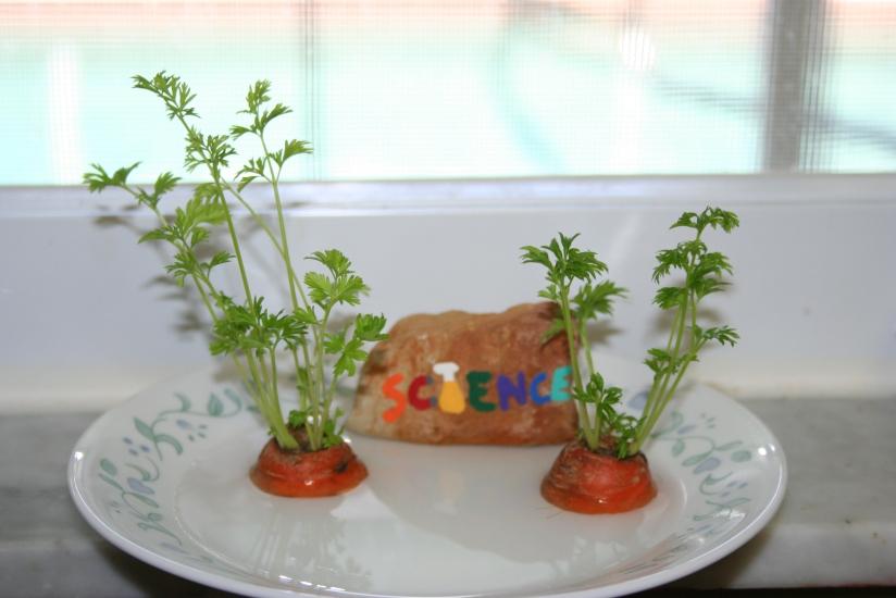 Growing Carrot Greens