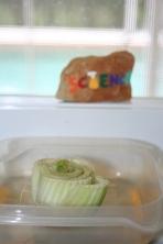 Regrowing Celery in Water (24)