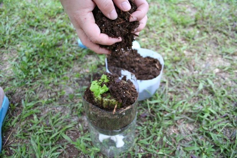 2 Liter Self Watering Planter (24)