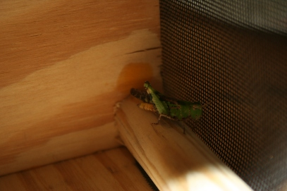 DIY Build Your Own Bug House (243)