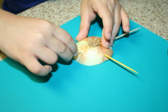 Regrowing Leftover Onion Base (5)