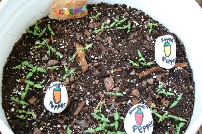Seedlings Day 10